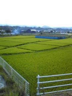 好間の田圃2.jpg